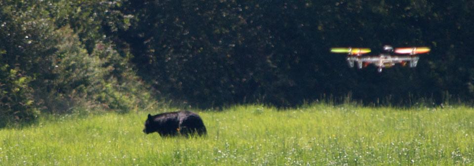 Drone vicino ad un Orso